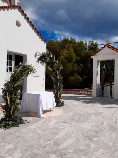 Olive Pampas 2019 4
